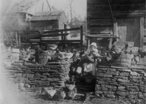 Mrs. Amelia Mears Greenlee on the farm with her brood of chickens in Grassy Creek 1917.